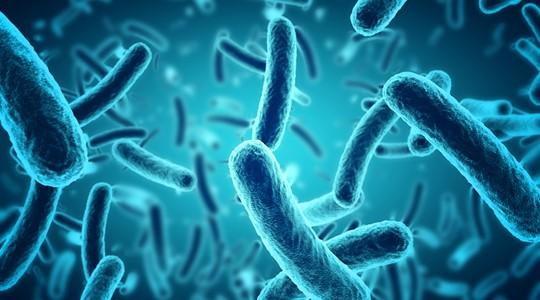 Micro-organisme