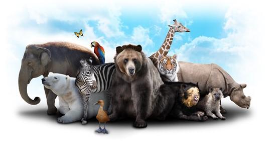 Dikke dieren